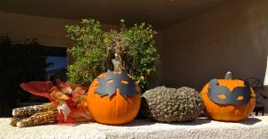 Pumpkin Lineup